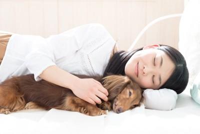 女性の隣で眠るダックスフンド