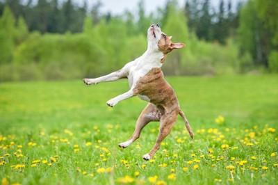 変なジャンプの犬