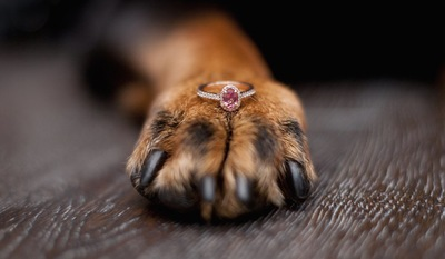 指輪を乗せた犬の前足