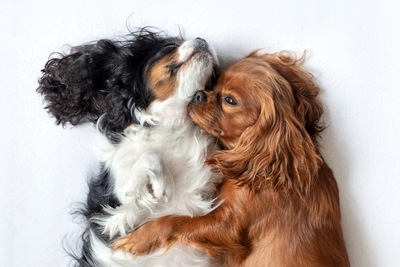 添い寝する2匹の犬