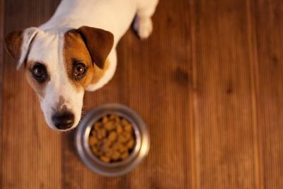 見つめる犬とドッグフード
