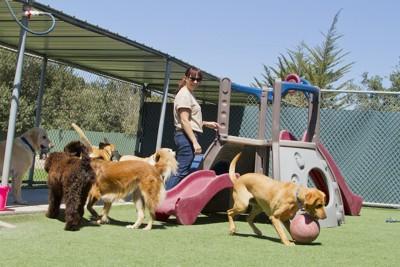 預かり施設で遊ぶ犬たち
