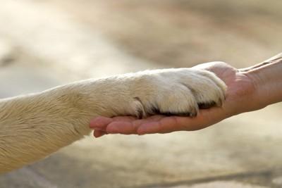 犬の手アップ