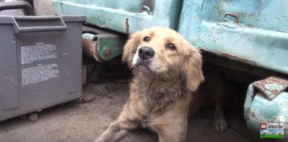 隠れ場所から出た犬