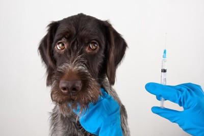 注射器を持つ獣医師の手と怖がる犬