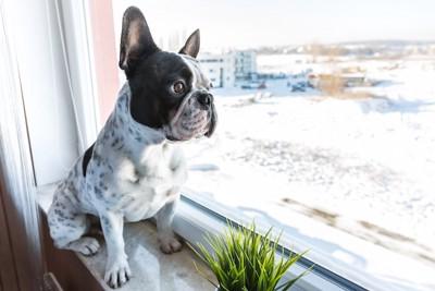 窓辺に座って外を眺める犬