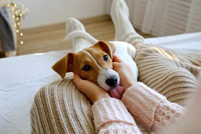 飼い主さんの足の上に頭を乗せて撫でられている犬