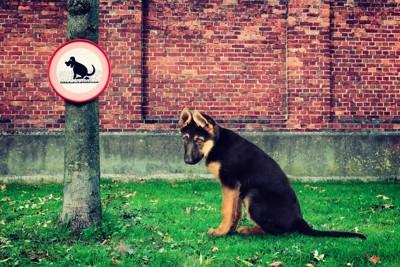 木に設置された看板と犬