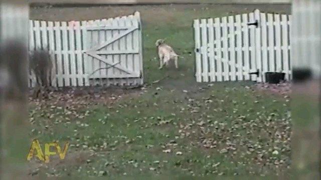 門へ入る犬