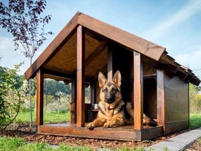 屋外の犬小屋でくつろぐシェパード
