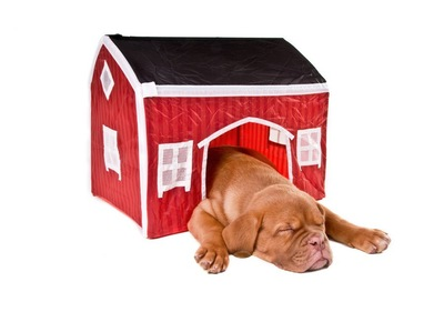 家のテントからはみ出して眠る犬