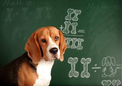 計算する犬