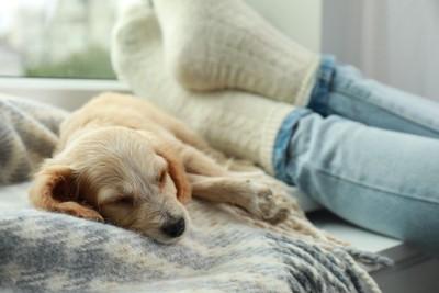 休んでいる飼い主の足元で眠る犬