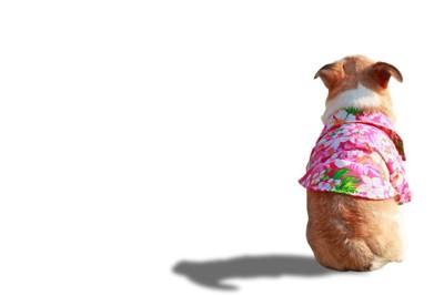 太り気味の犬の後ろ姿