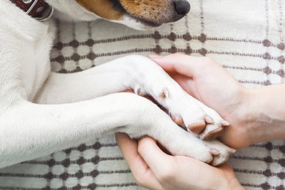横たわる犬の手を握る女性