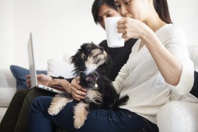 コーヒーを飲んでいる飼い主の膝の上に乗っている犬