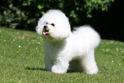 フワフワの犬