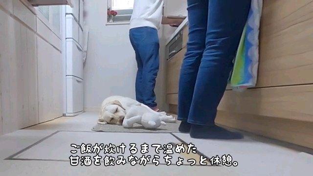 ご飯が~字幕