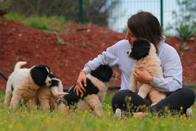 ランドシーア子犬のお世話をする女性