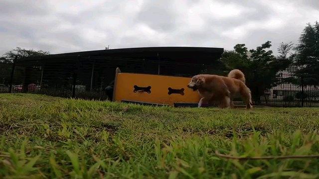 トンネル横切る犬