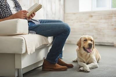 本を読む飼い主の足元に座る犬