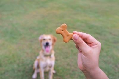 骨型クッキーを持つ手と犬