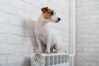 暖房器具の上に乗っている犬