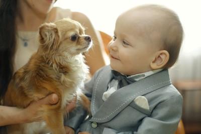 距離が近い犬と赤ちゃん