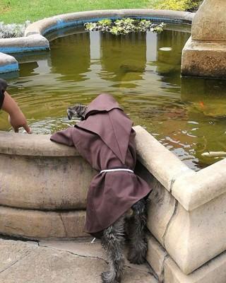 水の中の魚を見ている犬