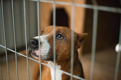 檻の中に閉じ込められた茶色の犬