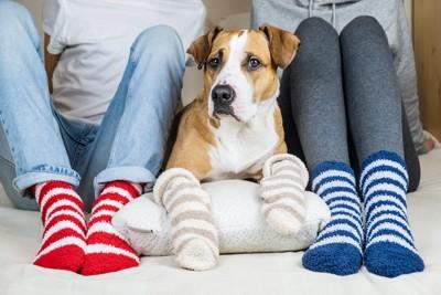 飼い主二人と色違いの靴下を履く犬