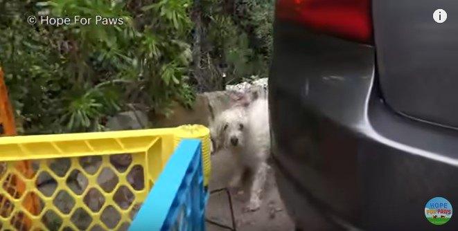 逃げ道を探す犬