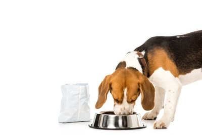 ドッグフードの袋と食事中の犬