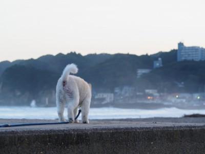 海岸を散歩する犬の後ろ姿