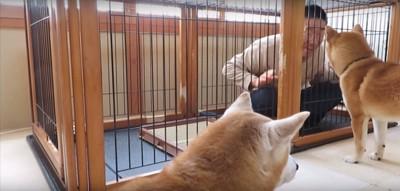 ケージの中の飼い主さんを見る2匹