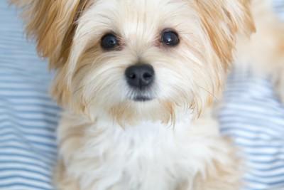 可愛い表情で甘える犬