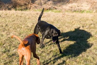 近づき合う2匹の犬
