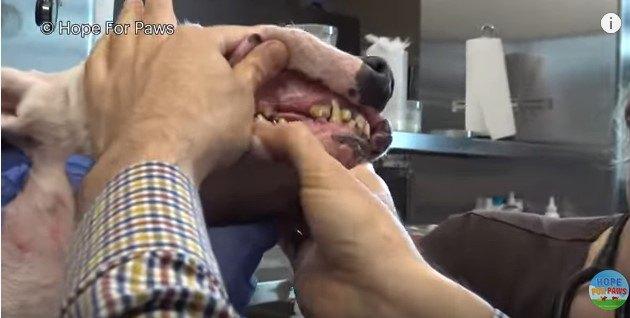 口の中の検査