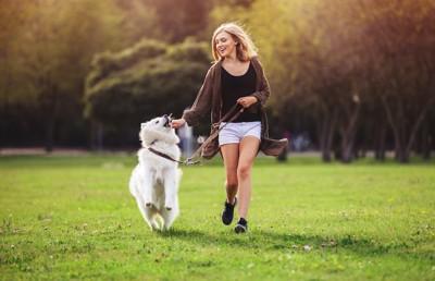 飼い主と散歩を楽しむサモエド