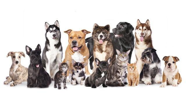 たくさんの犬種