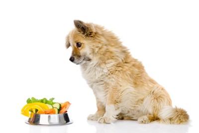 ご飯の前でくびをかしげる犬