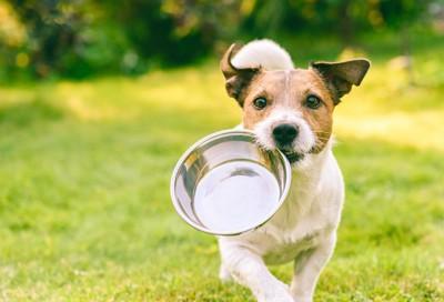 お皿を咥えて駆け寄る犬