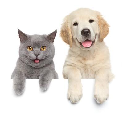 笑っている犬と猫