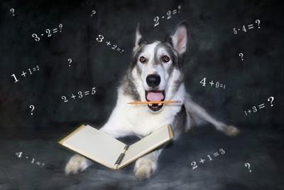 勉強する犬