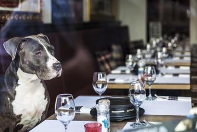 レストランの座席で待てをしている犬