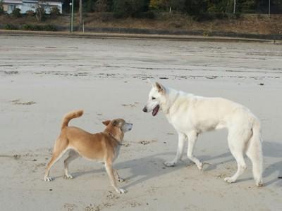砂浜で見合う2匹