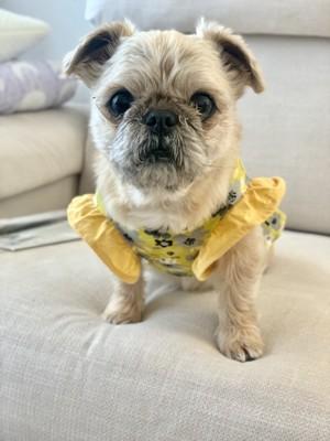 黄色い服を着ている音次郎