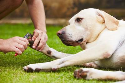 爪切りをしている犬