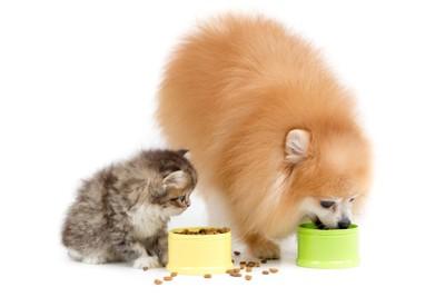 食事中のポメラニアンと子猫