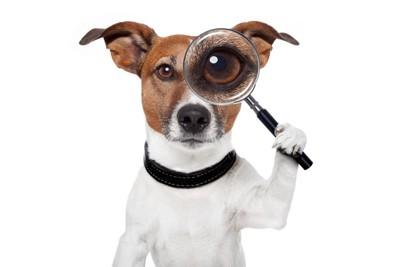 虫眼鏡を目にあてる犬